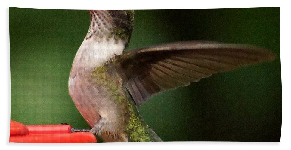 Nature Hand Towel featuring the photograph Landing by Paul Wilford