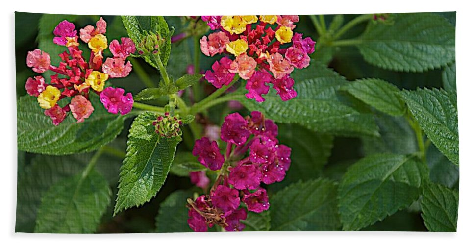 Flower Bath Sheet featuring the photograph Lantana by Joseph Yarbrough