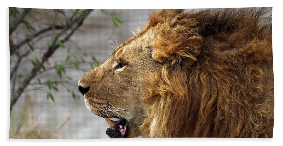 Lion Hand Towel featuring the photograph Large Male Lion Profile Portrait by Carole-Anne Fooks