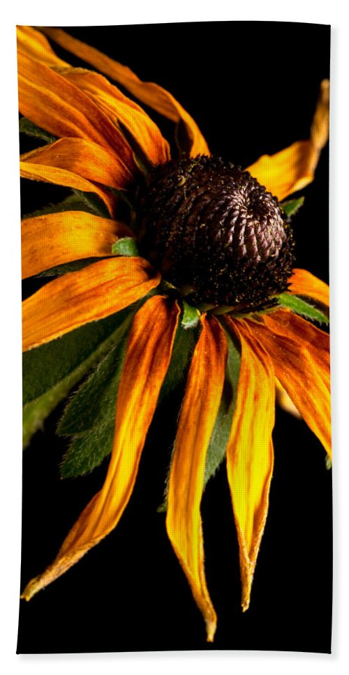 Black-eyed Susan Hand Towel featuring the photograph Last Day Of A Black-eyed Susan by Onyonet Photo Studios