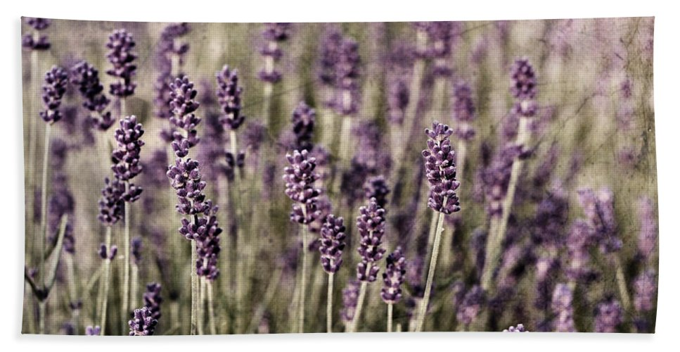 Lavender Bath Sheet featuring the photograph Lavender Field by Laura Melis