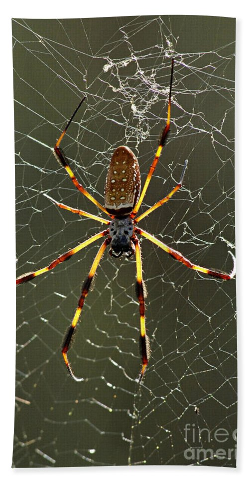 Spider Hand Towel featuring the photograph Laying In Wait by Bob Christopher