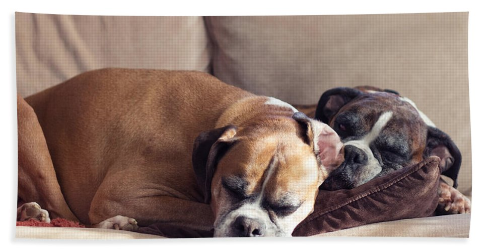 Boxer Hand Towel featuring the photograph Lazy Boxers by Stephanie McDowell