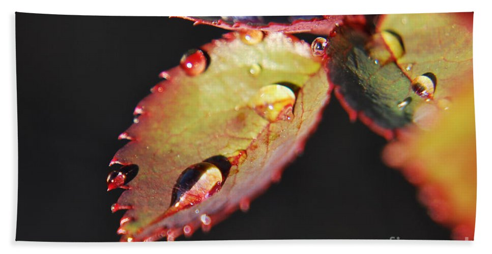 Yhun Suarez Hand Towel featuring the photograph Leaf And Dew Drops by Yhun Suarez