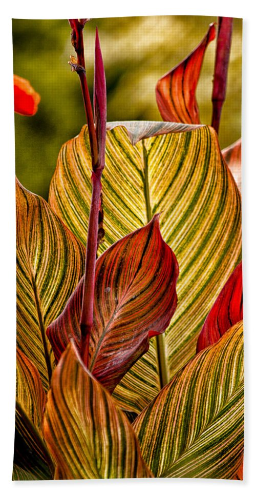 Leaves Hand Towel featuring the photograph Leaf Lines by Lauri Novak