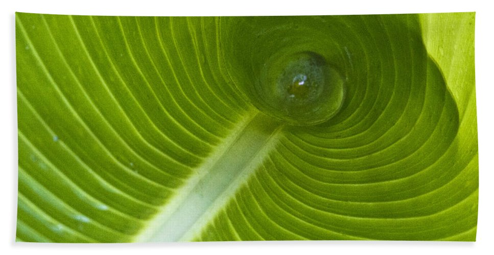 Heiko Bath Sheet featuring the photograph Leaf Tube by Heiko Koehrer-Wagner