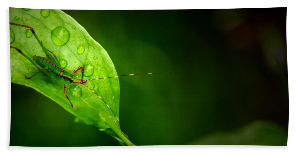 Leafhopper Hand Towel featuring the photograph Leafhopper 3 by David Weeks