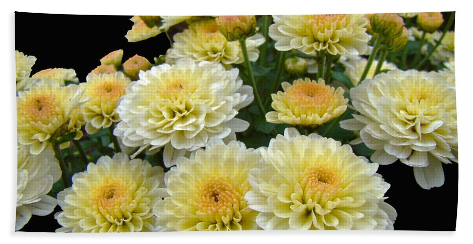 Chrysanthemums Bath Sheet featuring the photograph Lemon Meringue Chrysanthemums by Mother Nature