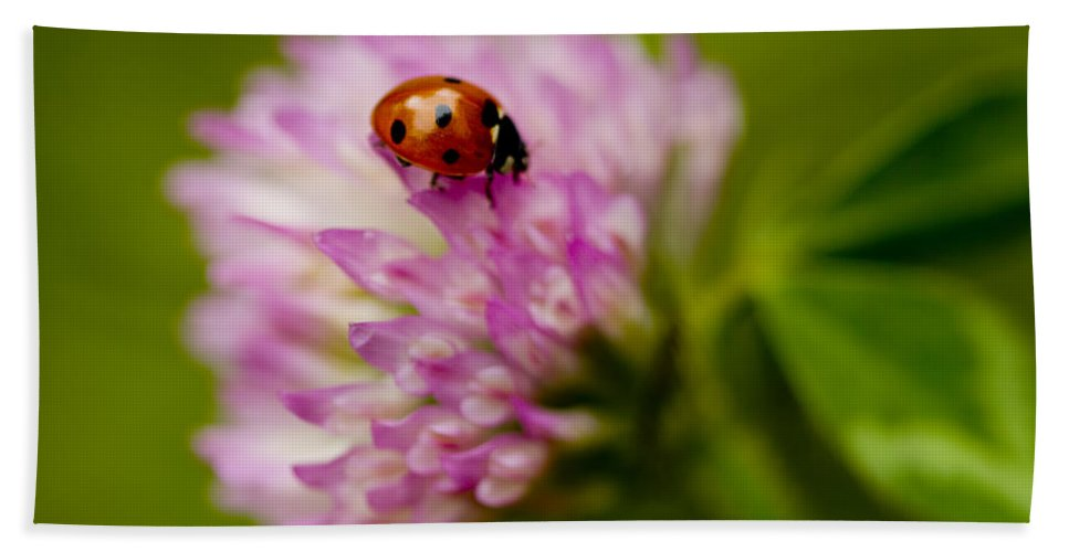 Coccinella Septempunctata Bath Sheet featuring the photograph Lensbaby Ladybug On Pink Clover by Kathy Clark
