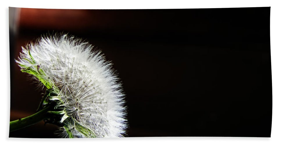 Dandelion Hand Towel featuring the photograph Let's Investigate by Adam Vance