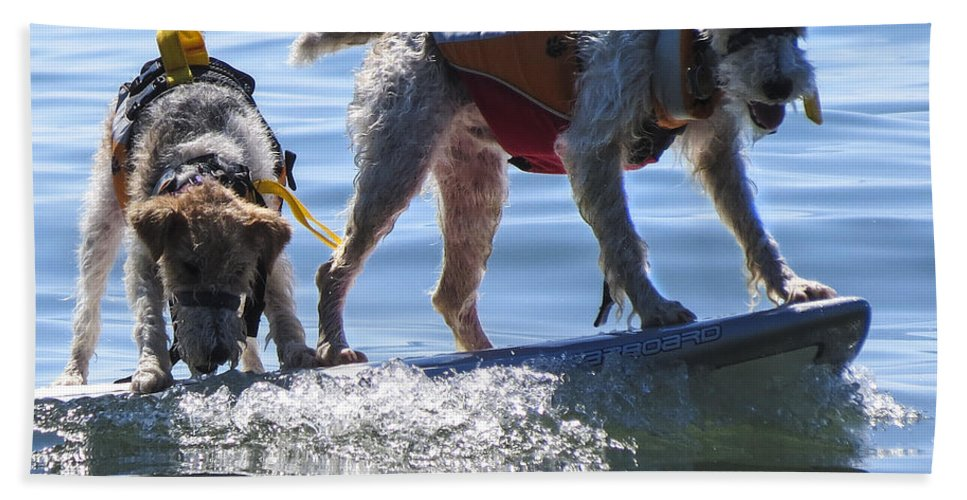 Dog Hand Towel featuring the photograph Let's Surf Dude by Darleen Stry