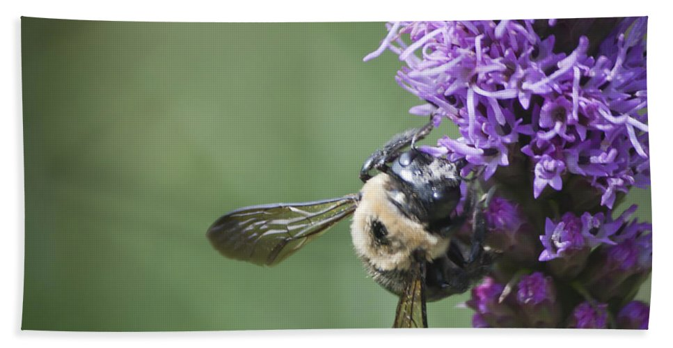 Gayfeather Bath Sheet featuring the photograph Liatris And Bee Squared 2 by Teresa Mucha
