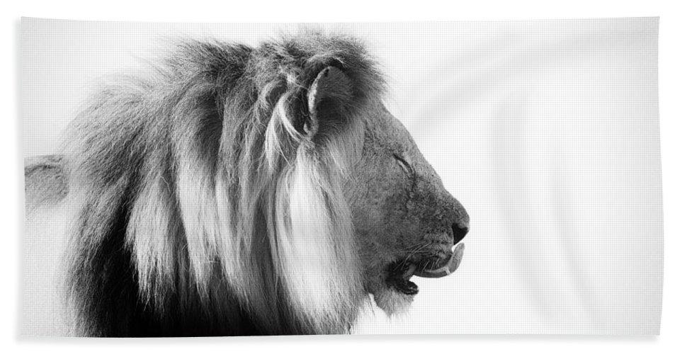 African Lion Bath Sheet featuring the photograph Licking Lips by Douglas Barnard
