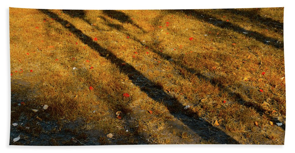 Autumn Bath Sheet featuring the photograph Lights And Shadows by Michael Goyberg