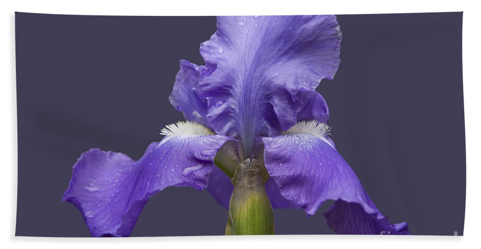 Nature Bath Sheet featuring the photograph Lilac Iris by Heiko Koehrer-Wagner