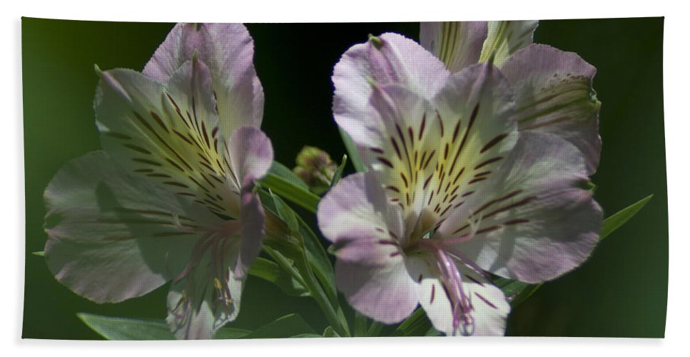Nature Bath Sheet featuring the photograph Lily - Liliaceae 3 by Heiko Koehrer-Wagner