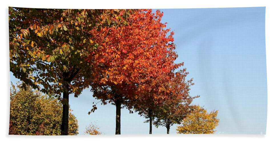 Trees Bath Sheet featuring the photograph Line Of Autumn Trees by Christiane Schulze Art And Photography