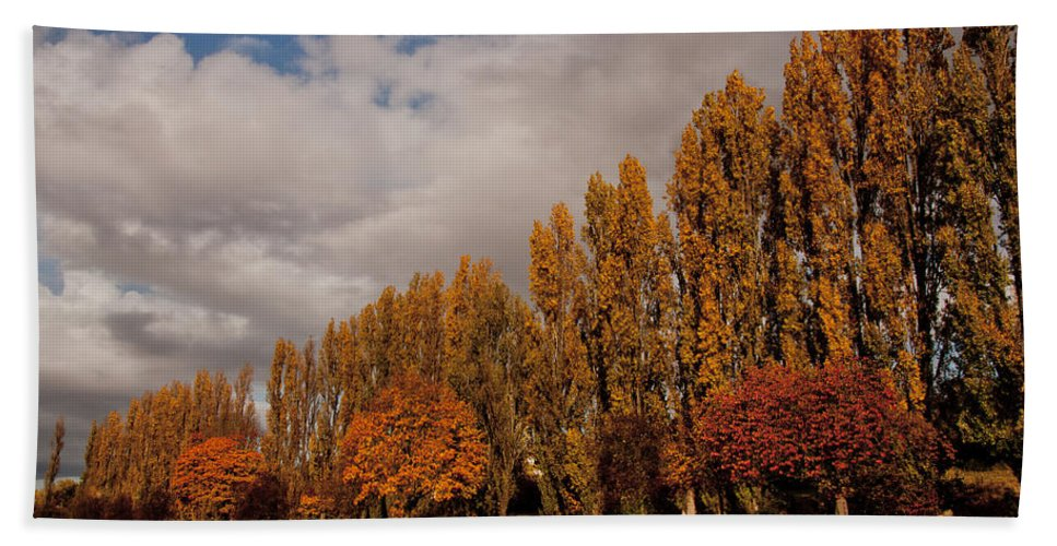 Autumn Bath Sheet featuring the photograph Line Of Trees by Dawn OConnor