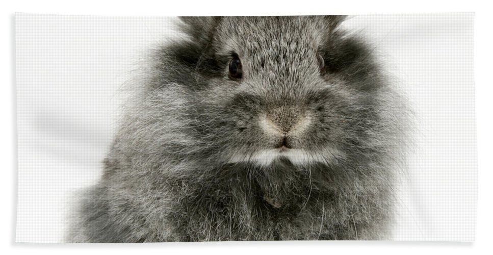 Animal Hand Towel featuring the photograph Lionhead Rabbit by Jane Burton
