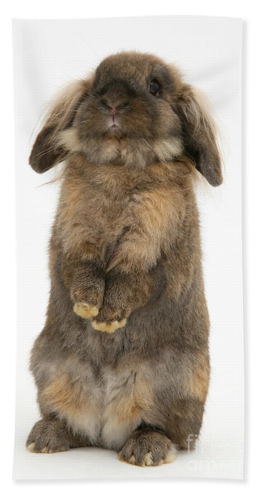 Animal Hand Towel featuring the photograph Lionhead Rabbit by Mark Taylor