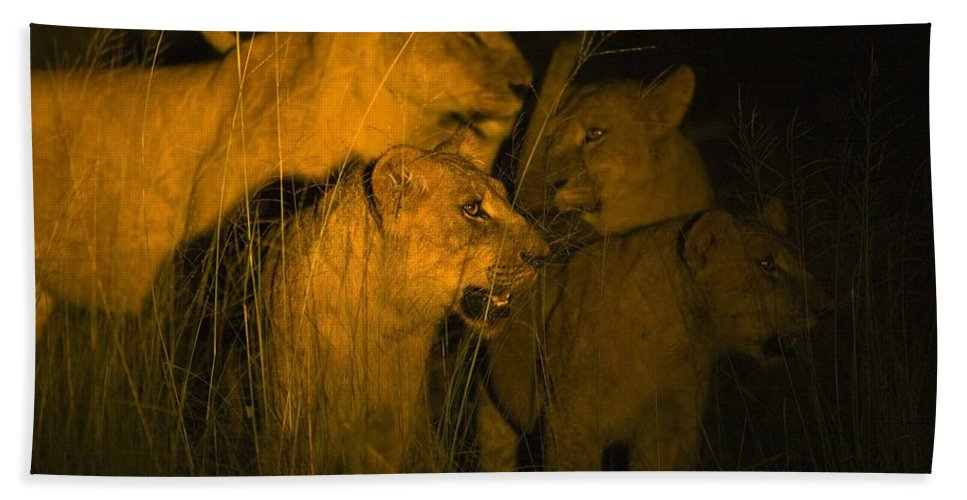 African Bath Towel featuring the photograph Lions At Night by Carson Ganci