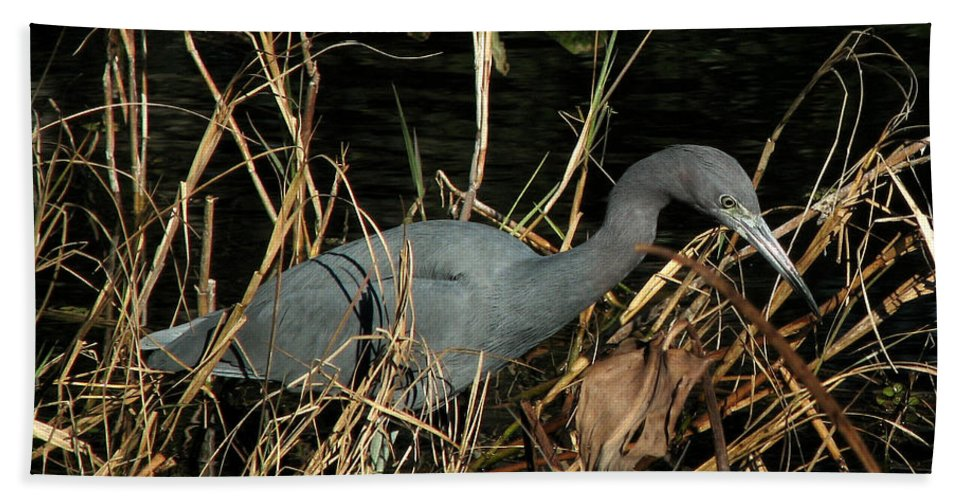 Nature Bath Sheet featuring the photograph Little Blue Heron by Peg Urban