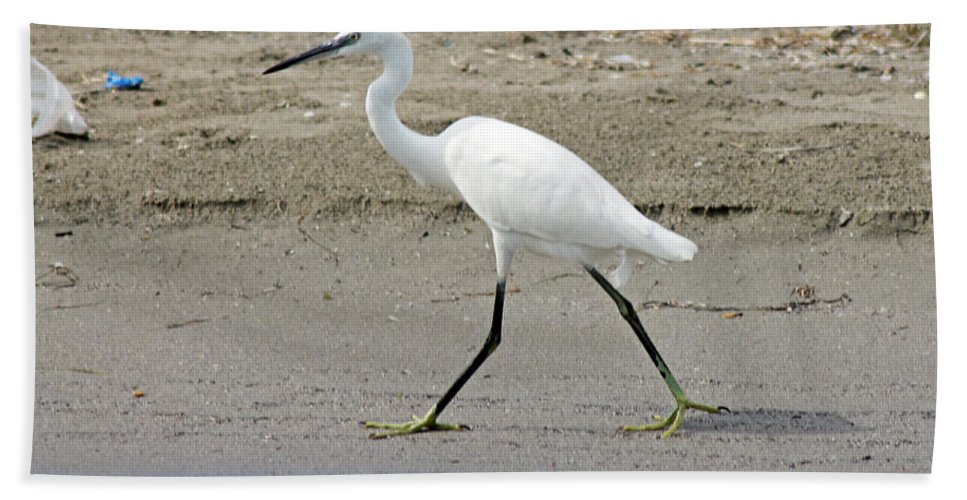 Egret Hand Towel featuring the photograph Little Egret by Tony Murtagh