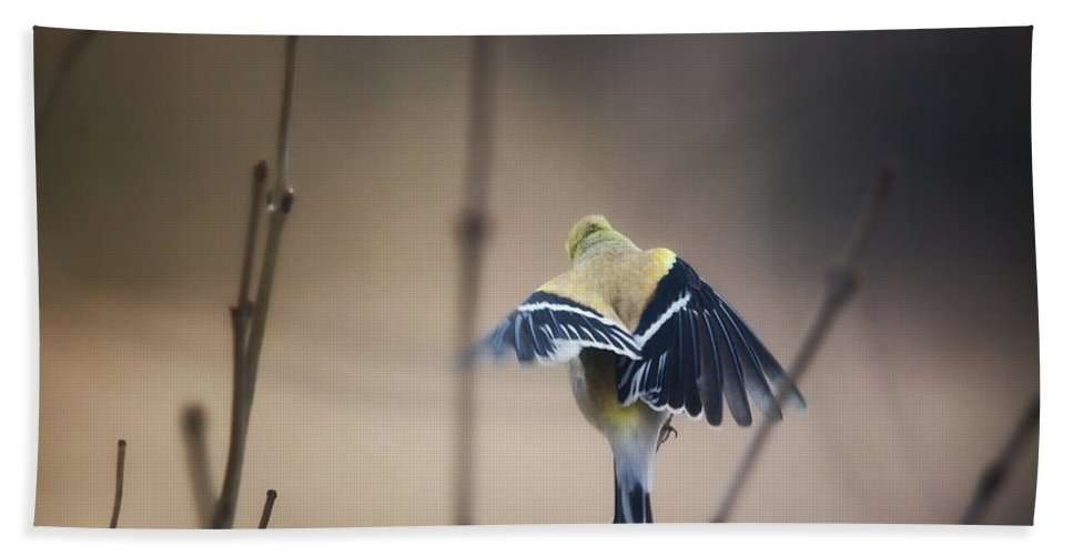 Birds Hand Towel featuring the photograph Little Wings by Susan Capuano