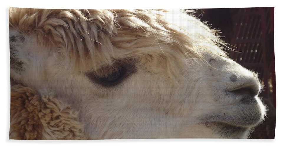 Llama Hand Towel featuring the photograph Llama Mmama by Art Dingo