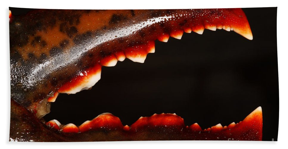 Northern Lobster Hand Towel featuring the Lobster Claw by Ted Kinsman