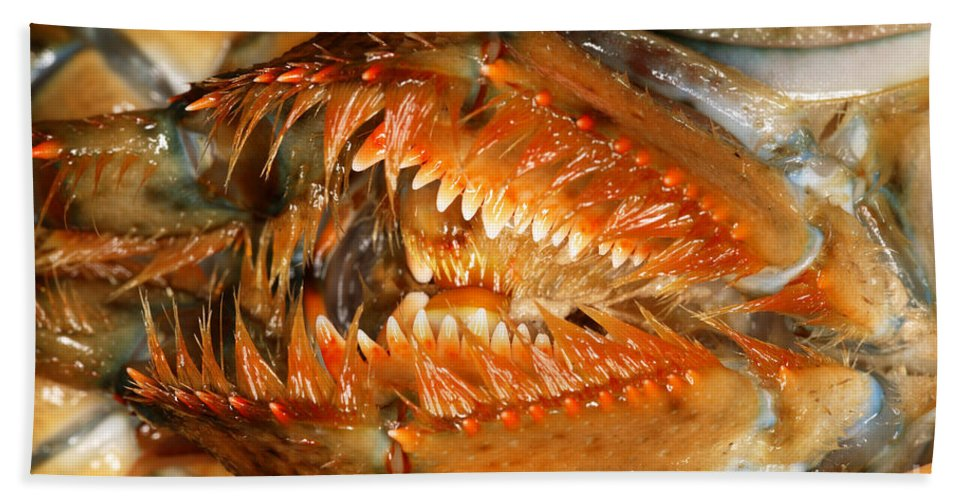 Northern Lobster Hand Towel featuring the photograph Lobster Mouth by Ted Kinsman