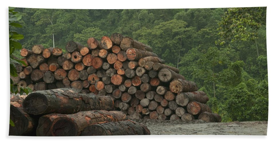 Mp Hand Towel featuring the photograph Logging Of Native Rainforest, Ecuador by Murray Cooper
