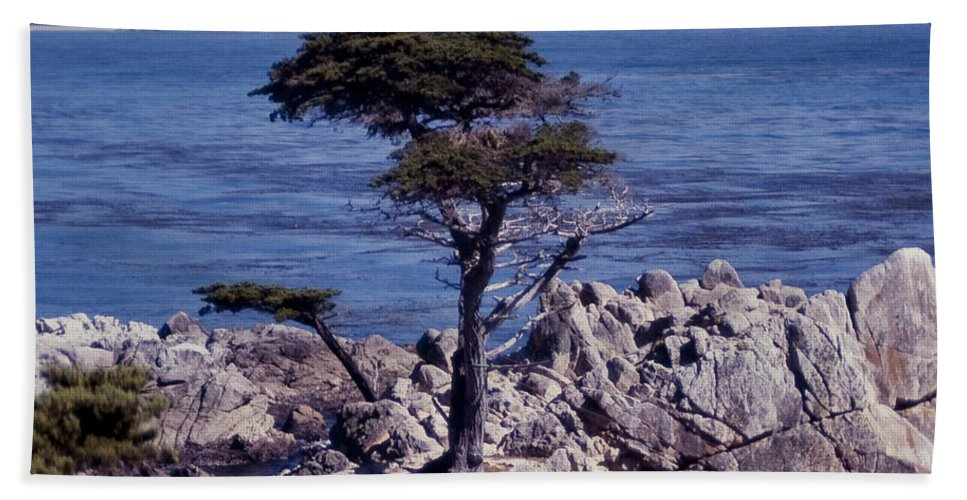 California Bath Sheet featuring the photograph Lone Cypress By The Sea by Stephen Whalen