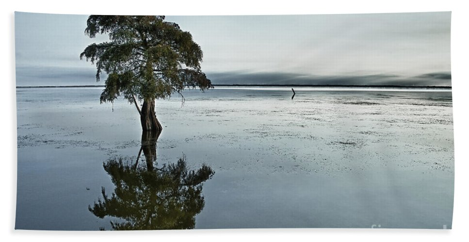 Individual Hand Towel featuring the photograph Lone Cypress Tree In Water. by John Greim