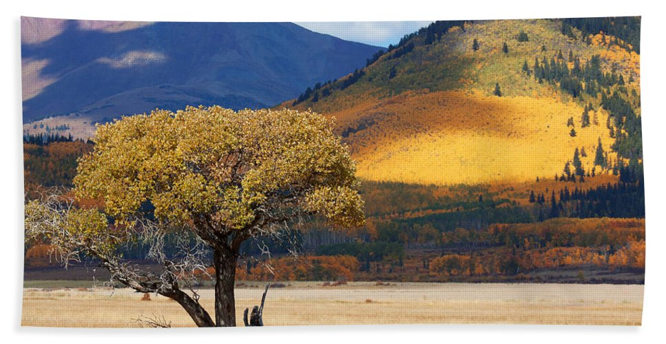 Aspen Hand Towel featuring the photograph Lone Tree by Jim Garrison