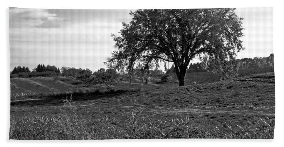 Usa Bath Sheet featuring the photograph Lone Tree by LeeAnn McLaneGoetz McLaneGoetzStudioLLCcom