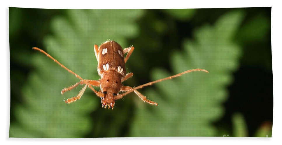 Insect Hand Towel featuring the Long-horned Beetle In Flight by Ted Kinsman
