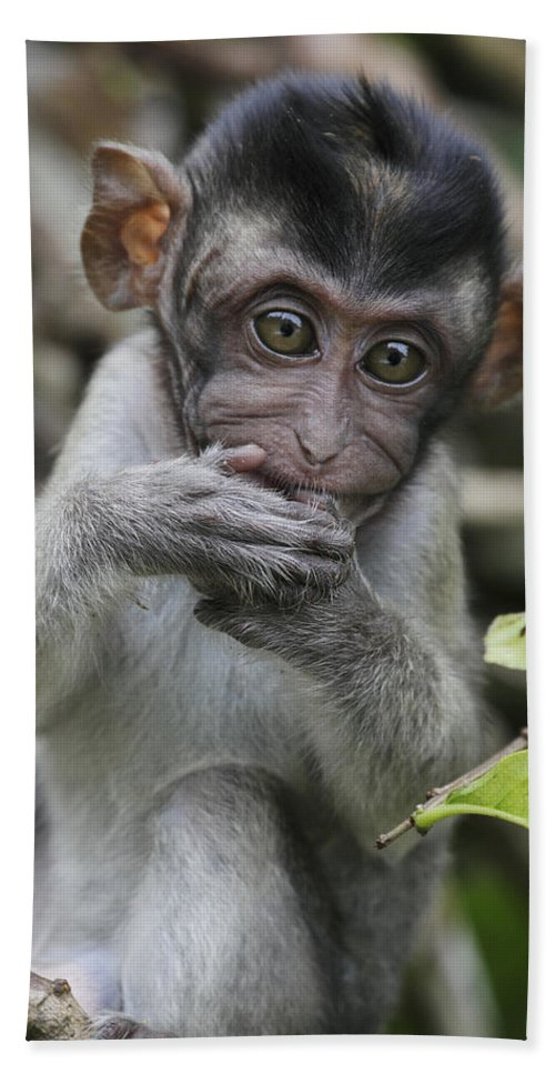 Mp Hand Towel featuring the photograph Long-tailed Macaque Macaca Fascicularis by Hiroya Minakuchi
