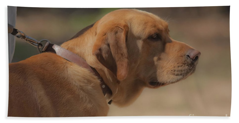 Dogs Bath Sheet featuring the mixed media Longing by Kim Henderson