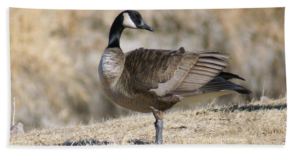 Goose Bath Sheet featuring the photograph Looking Back by Lori Tordsen