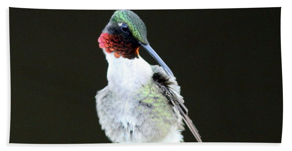 Hummingbird Bath Sheet featuring the photograph Looking Good by Travis Truelove