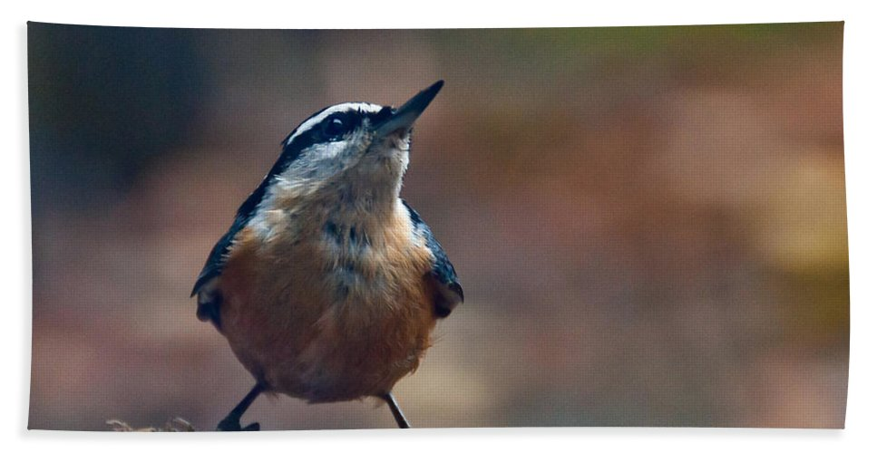 Nuthatch Hand Towel featuring the photograph Looking Up by Cheryl Baxter