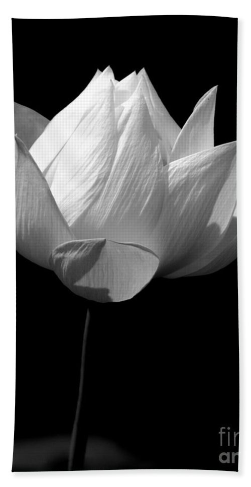 Floral Bath Sheet featuring the photograph Lotus Bw by Mark Gilman