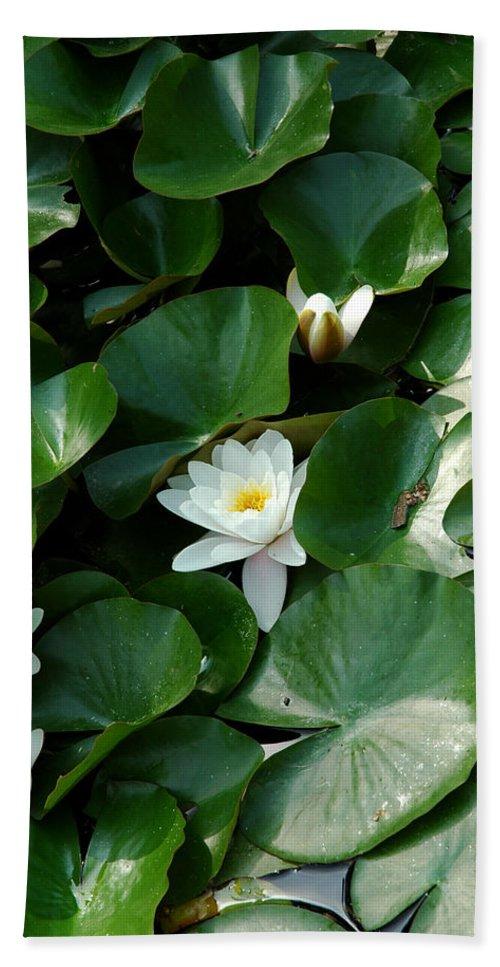 Usa Bath Sheet featuring the photograph Lotus by LeeAnn McLaneGoetz McLaneGoetzStudioLLCcom