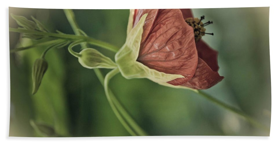 Plant Hand Towel featuring the photograph Lovely Lady by Trish Tritz