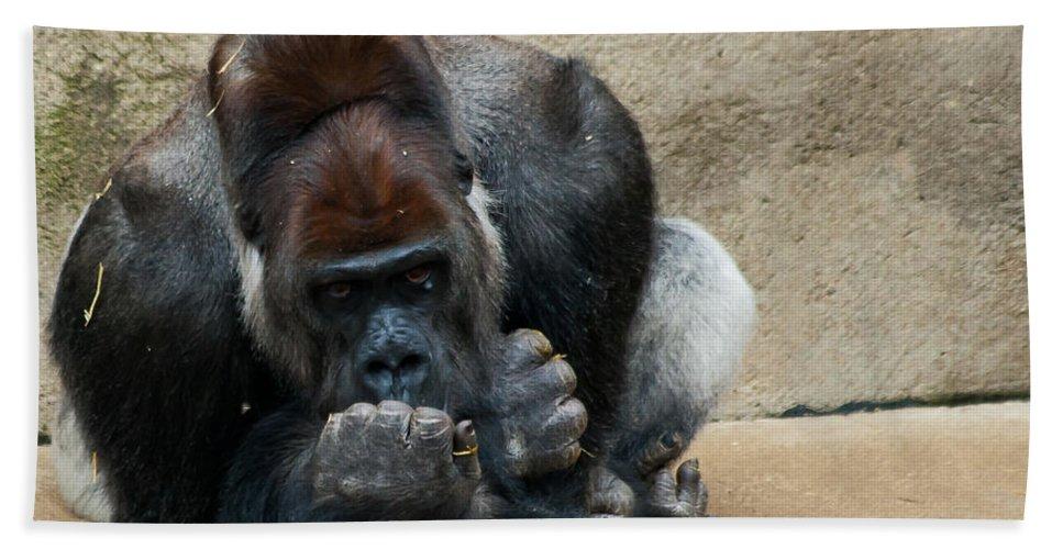 Animals Bath Sheet featuring the photograph Lowland Gorilla by Keith Allen