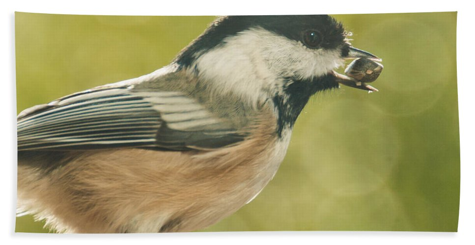 Chickadee Hand Towel featuring the photograph Lunch Time by Cheryl Baxter
