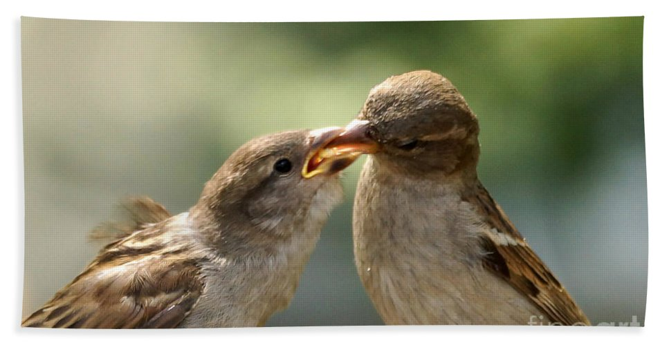 Sparrow Hand Towel featuring the photograph Lunch Time by Lori Tordsen