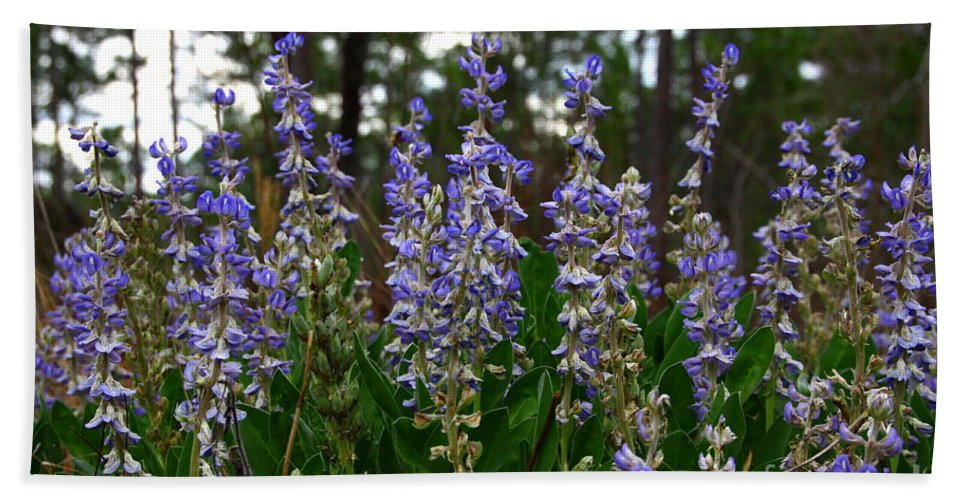Lupine Hand Towel featuring the photograph Lupine Patch by Barbara Bowen