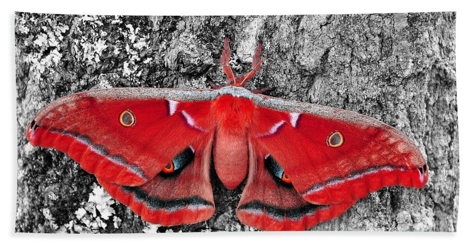 Moth Hand Towel featuring the photograph Madam Moth - Red White And Black by Al Powell Photography USA